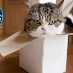 【ギネス世界記録!】猫のまるさんがYouTubeで最も視聴された動物に認定!