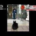 【中に入りたいニャ!広島県の尾道市立美術館】「猫まみれ展」に黒猫が訪問!