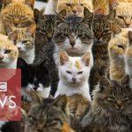 【BBCニュース公式!猫の楽園】愛媛県青島は猫の島(Cat Island)!