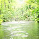 【癒し効果抜群!深緑の森の自然音】奥入瀬渓流のせせらぎや鳥のさえずり!