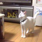 【猫から学ぶ猫背を治す方法とは?】背筋がピンとした猫!