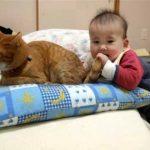 【何をしても怒らない猫!】猫の尻尾を口に入れる赤ちゃん!