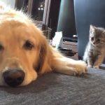 【拾われたばかりの子猫と犬!】仲良しになる決定的瞬間!