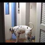 【独り(一匹)でエレベーターに乗って上の階に行く賢い犬!】三菱日立ホームエレベーター!