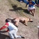 【楽しいぬ(犬)!】ソリ滑りを独特の方法で滑る犬!