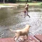 【湖に落ちた!】飼い主を必死に助ける犬!