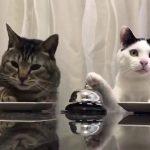 【賢いネコ!】ベルを鳴らして餌をもらう猫!