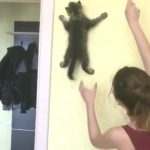【垂直な壁をスルスル!】忍者のように登る猫!