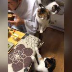 【栃木県那須の長楽寺】猫4匹と朝食を食べる住職!