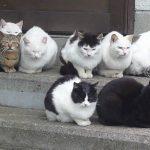 【かわいいものを発見!ネコの井戸端会議】猫の集会を見つけた!