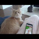 【猫と会話できる!】猫語翻訳機TocTocCatの性能とは?体験レビュー!