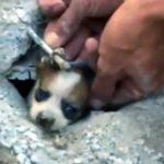 【助かって良かった!】地面の下の水道管に3日間閉じ込められた子犬を救出!