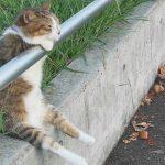【じわじわくる!】手すりに手をかけてお座りし、夕日を眺める猫!