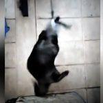 【ヒャッハーッ!!】タイのバンコクで高速回転して遊ぶカワウソ!