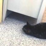 【猫あるある】鏡に映った自分と戦うネコ!