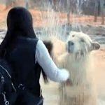【動物の人真似!中国】女の子と同じ動きをするライオン!