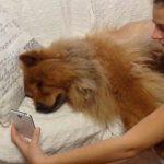 【スマホドッグ!】スマートフォンで通話する犬!