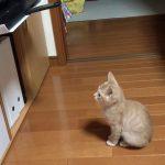【プリントアウトの挙動にびっくり!】プリンタが印字するのを待つ猫!