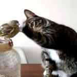 【猫が小鳥をナデナデ!】小鳥に興味津々のネコ!