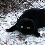 【ノルウェーのオスロ】初めて雪を見た黒猫!