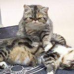 【気持ちいいニャ~!】香港で猫が猫にマッサージ!