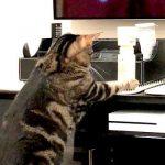 【プシャーッ!】スプレーの噴射にびっくりして飛び跳ねる猫!