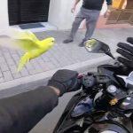 【ナイスキャッチ!】バイクに乗ってたら鳥をゲット!