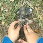 【ベトナムのベンチェ省】溺れた子犬を救助!