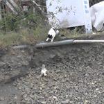 【感動!猫の世界も母は強し】子猫を救う母親猫!