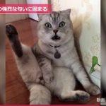 【びっくりだニャ!フレーメン反応(フレーメン現象)】猫の驚いた顔!