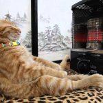 【あったかいニャ~!】ストーブの前でくつろぐ猫!