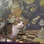 【数学猫!ロシアのサンクトペテルブルク】数字の計算ができるネコ!
