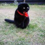 【匍匐前進!ノルウェー】常に臨戦態勢の猫!