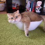 【ロシアのモスクワの猫!】箱に入るのが好きなネコ!