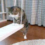 【楽しいニャ~!】ブランコに乗って遊ぶ猫!