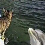 【オーマイゴーだニャ!】猫とイルカの交流!