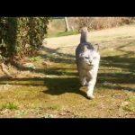 【スマホの猫語翻訳アプリ!】公園の猫と会話!