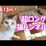 【出口はどこかニャ?】長い段ボールのトンネルに入る猫!