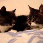 【ニャ~ニャ~!】猫同士の会話!