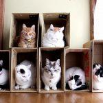 【中に入りたいニャ!】7つの箱に7匹の猫がおさまる!