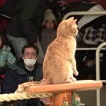 【那須どうぶつ王国!栃木県那須郡那須町】動物園初の猫によるショー「ザ・キャッツ」