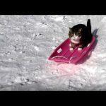 【すべるニャ~!】そりで滑って遊ぶ猫!