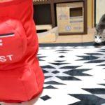 【猛スピードだニャ!】猫アタック!