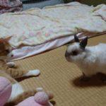 【安全地帯に逃げるニャ!】猫とウサギのバトル!