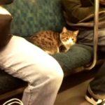 【電車ネコ!】山手線に乗る猫!