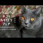 【ホームセンターグッデイ公式】ネコとあそぼうフェア!