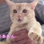 【逃げるニャ!】しつこいおばあちゃんから逃げる猫!