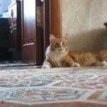 【想定外の大爆笑だニャ!】逃げ方が面白すぎる猫!