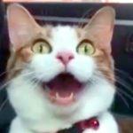 【眠たいニャ!】30秒間続く猫の長いあくび!