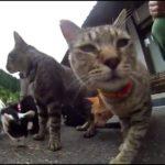 【福井県越前市の御誕生寺】猫寺がネコだらけ!
